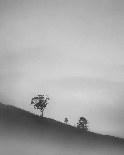 Gdfg Landscape