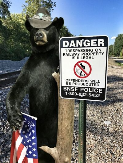 https://youtu.be/u3JTI-FeTx0 Township Rebellion Capturing Freedom No People Animal Themes Black Bear Statueporn Mother Vs Nature Signporn Tresspassing For Art The Wrong Side Of The Tracks Lots Of Rocks Treescape Ain't That America Dreaming Of Blue Skies Sunlight And Shadow Musical Photos Rage Against The Machine