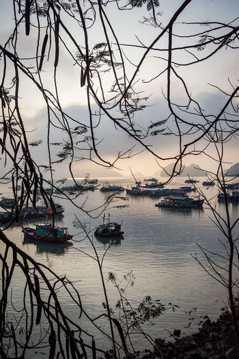 traveling Vietnam 2018 ASIA Travel Traveling Vietnam Beauty In Nature Cloud - Sky Day Explore Marina Mode Of Transportation Moored Nature Nautical Vessel No People Outdoors Plant Port Sailboat Scenics - Nature Sea Sky Tranquil Scene Tranquility Transportation Tree Water Yacht