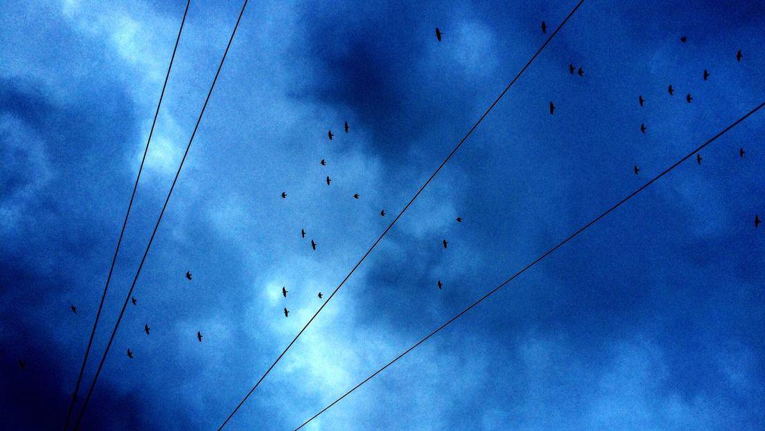 (C) Alexander Eger Showcase: November Berlin SNAPSHOTS Birds Blue Clouds Silhouette Swarm Of Birds