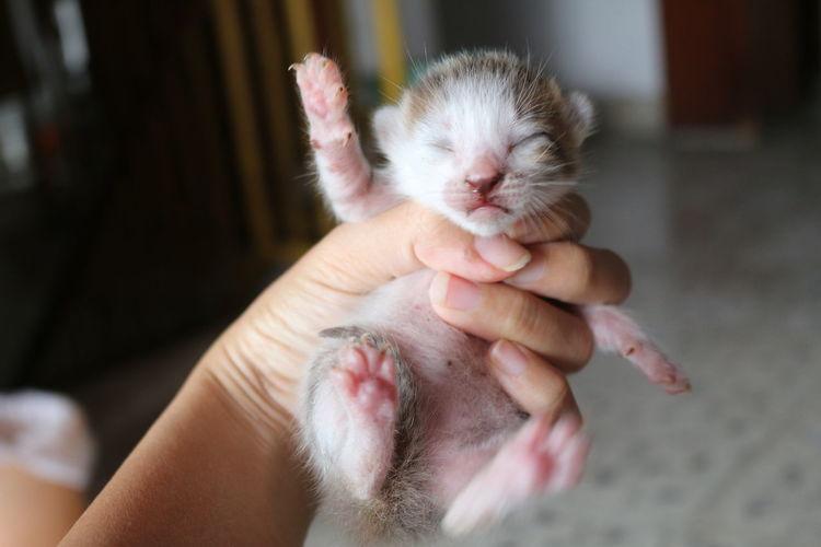 Close-up of waving cat