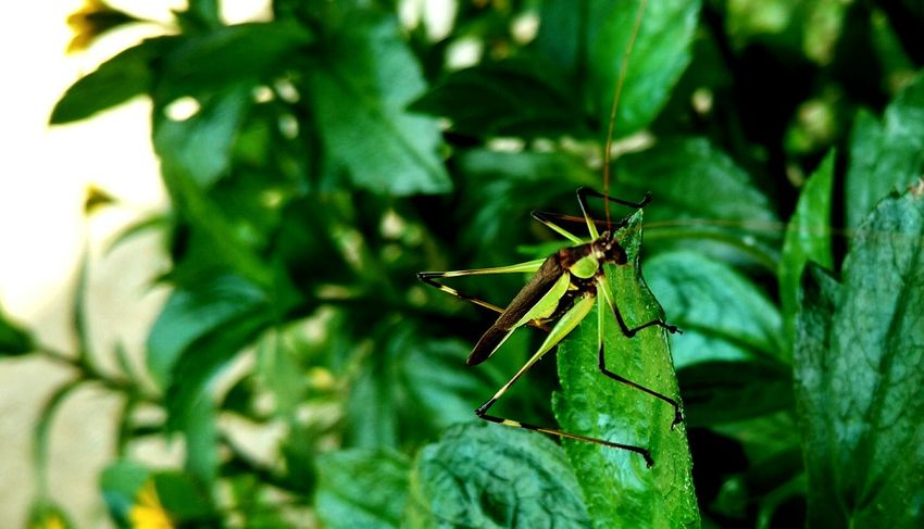 Beautiful creature....just see the camouflage of nature in itself! Insect Animal Themes One Animal Animals In The Wild Close-up Nature Leaf Green Color Plant Animal Wildlife No People Outdoors Day Beauty In Nature
