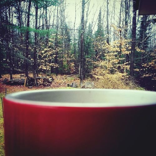 Coffee in the sticks. Tree Nature No People Day Tranquility Outdoors Beauty In Nature Coffee Maine