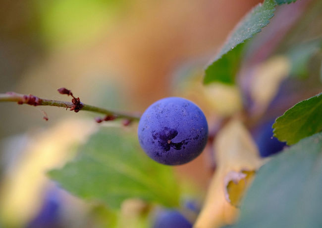 Berry Fruit Branch Focus On Foreground Fruit Healthy Eating Leaf Plant Plant Part Selective Focus Wellbeing