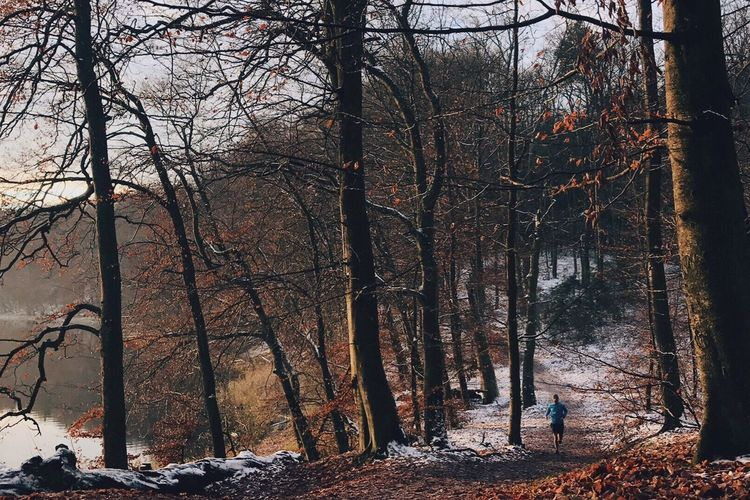 Trail Running Forest Nature Tree Winter Outdoors Landscape Cold Temperature Snow Sky Day Run
