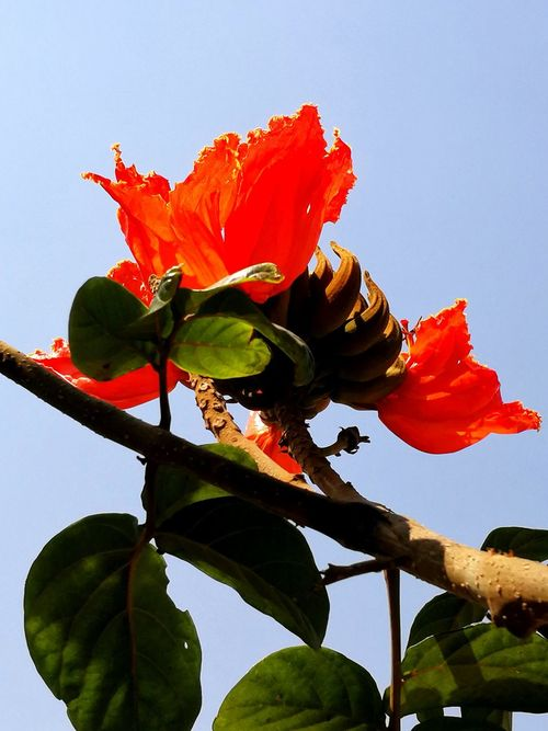 BEAUTY IN NATURE... RED FLOWER Leaf Flower Nature Plant Beauty In Nature Growth No People Red Fragility Day Freshness Low Angle View Sky