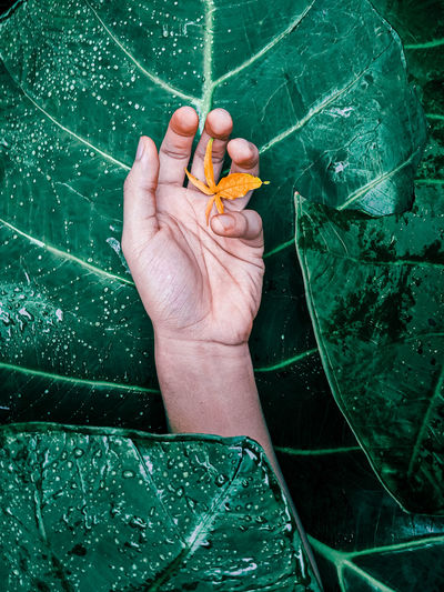 High angle view of hand holding leaf floating on water