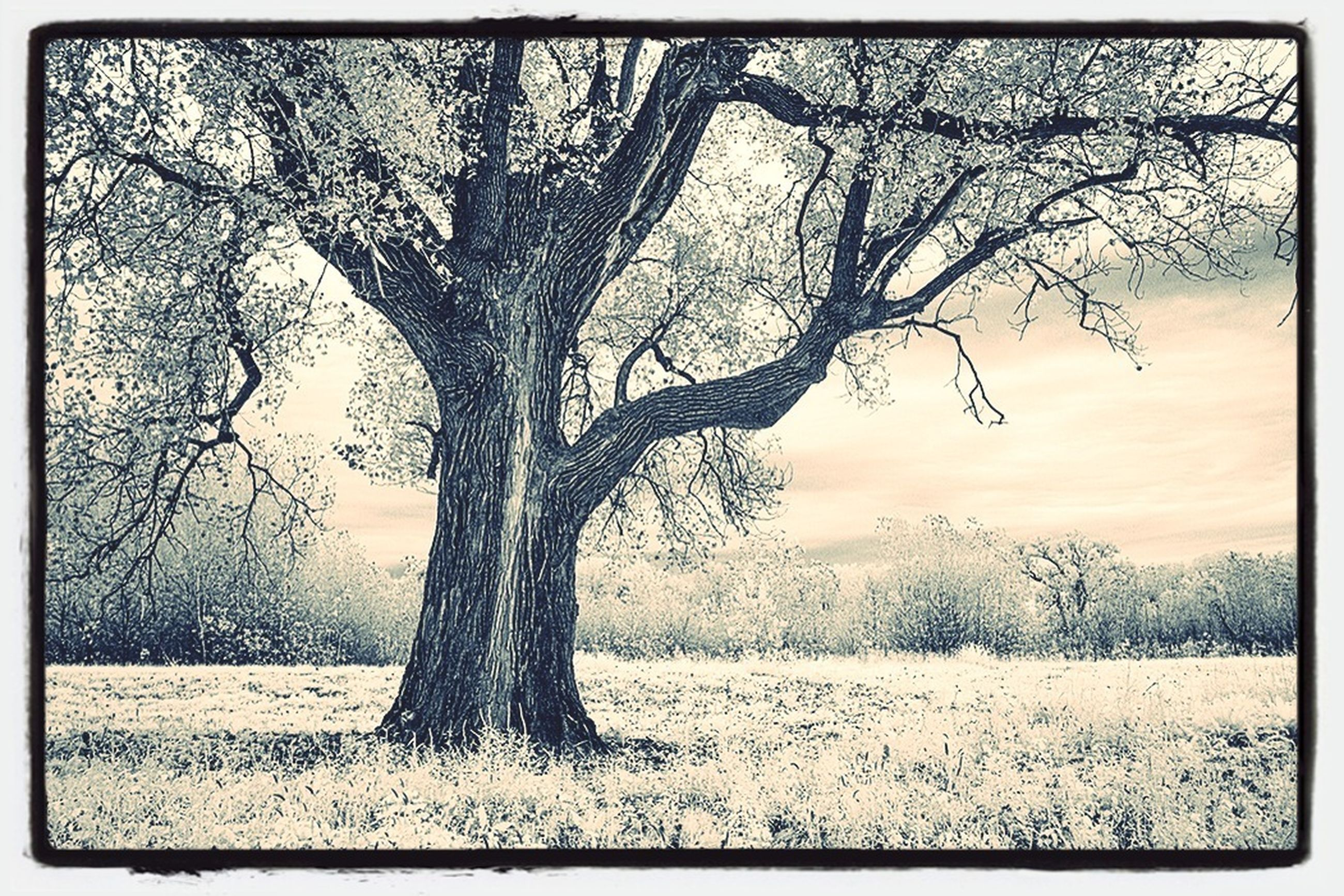 transfer print, bare tree, tree, auto post production filter, tranquility, branch, tranquil scene, scenics, nature, beauty in nature, tree trunk, field, landscape, sky, non-urban scene, single tree, sunset, water, winter, growth