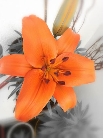 Orange Color Flower Pumpkin No People Poppy Close-up Day Flower Head Indoors  Freshness Nature