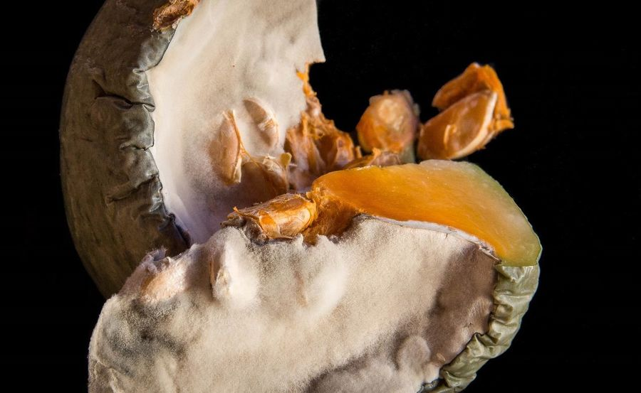 Black Background Close-up Food Food And Drink Furry Mouldy No People Pumpkin Rotting Studio Shot