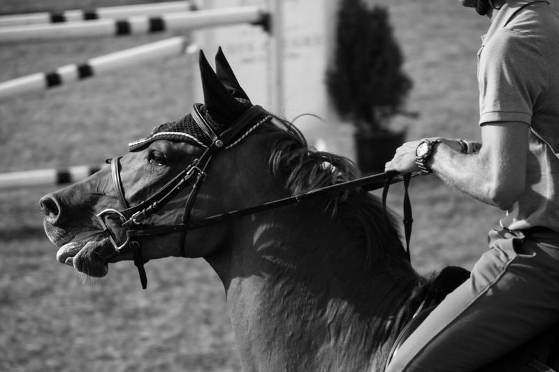 ''Two souls one mind'' Blackandwhite Competitive Sport Creamy Focus On Foreground Force Horse Horse Photography  Horse Riding Jockey Magestic Moody Silky Tension Zoom In