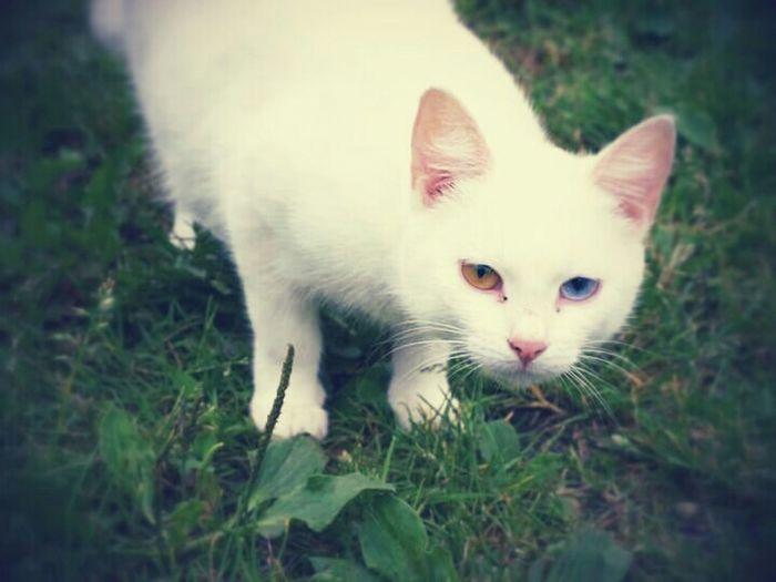 It Goes Both Ways Cat White Cat
