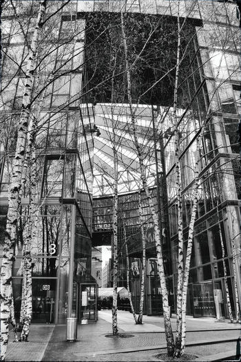 Architecture Berlin Photography Built Structure Bult Architecture City City Day Outdoors Tree