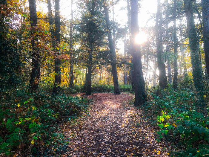 Morning Light Tree Forest Plant Tranquility Land Beauty In Nature Nature Tranquil Scene Growth Autumn Day Sunlight Non-urban Scene The Way Forward Footpath No People Scenics - Nature Direction WoodLand Outdoors Change Bright Trail Streaming