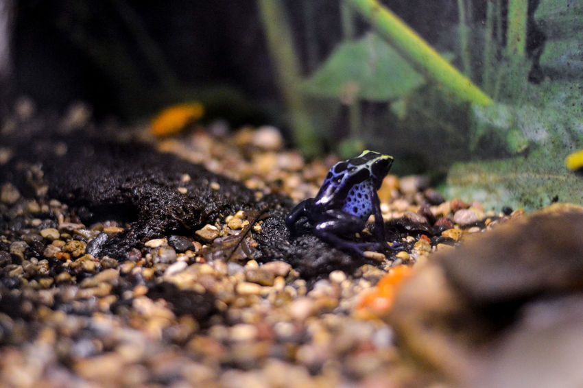 Reptile Animals In The Wild One Animal Animal Wildlife Animal Themes Selective Focus Day No People Nature Outdoors