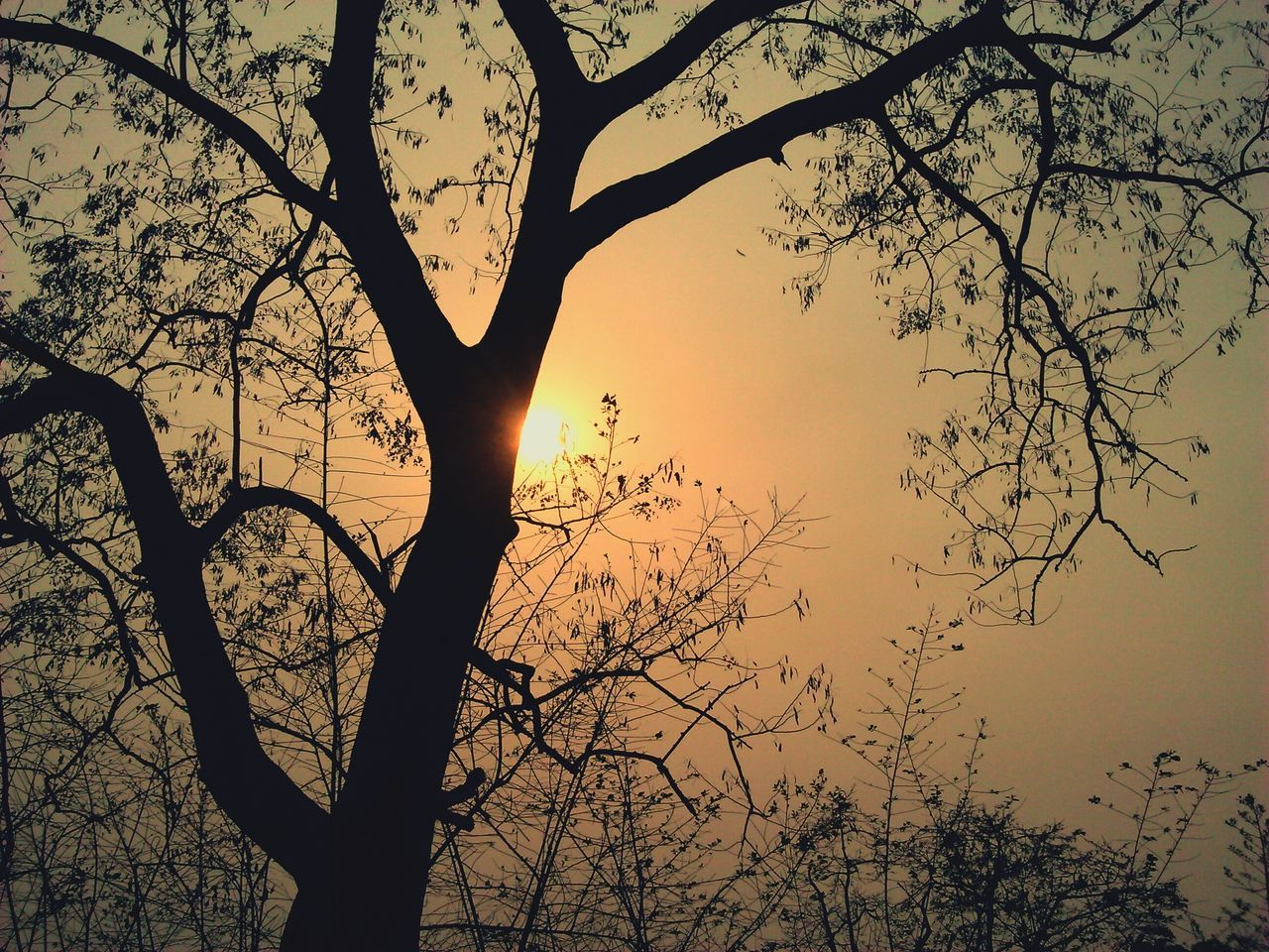 tree, branch, nature, silhouette, beauty in nature, bare tree, sunset, tranquility, tranquil scene, scenics, low angle view, sky, no people, outdoors, growth, day