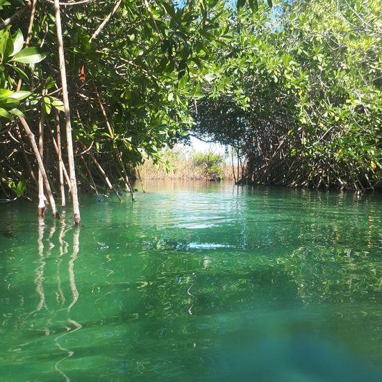 reserva de la Biosfera de sian ka'an Water Nature Green Color Day Beauty In Nature Tree No People Outdoors Growth