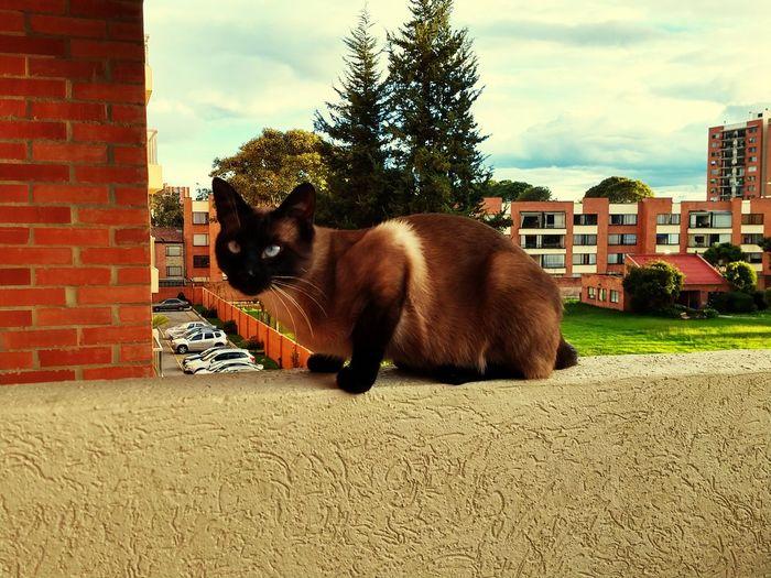 Dalí. Gato, Chat Sur Le Botd Du Balcon Pets Domestic Cat Sitting Cute Sky Animal Themes Building Exterior Puppy