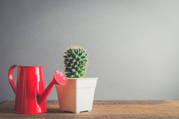 Beauty In Nature Cactus Close-up Container Copy Space Cup Day Flower Pot Green Color Growth Houseplant Indoors  Nature No People Plant Potted Plant Red Still Life Succulent Plant Table Wall - Building Feature Wood - Material