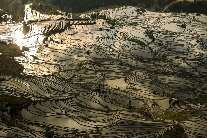 Backgrounds Beauty In Nature China Close-up Concentric Day Golden Nature No People Outdoors Reflection Reflections Rice Rice Field Rice Fields  Rice Paddy Rice Terraces Rural Scene Sunset Tree Water Yuanyang Yuanyang Terraced Fields Yunnan Lost In The Landscape Perspectives On Nature