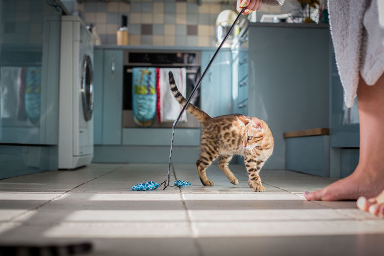 Animal Animal Themes Bengal Bengal Cat Bengals Cat Cute Day Dog Domestic Animals Domestic Life Domestic Room Indoors  Kitten No People One Animal Pets Spots Stripes Pattern Tiger Vet  You
