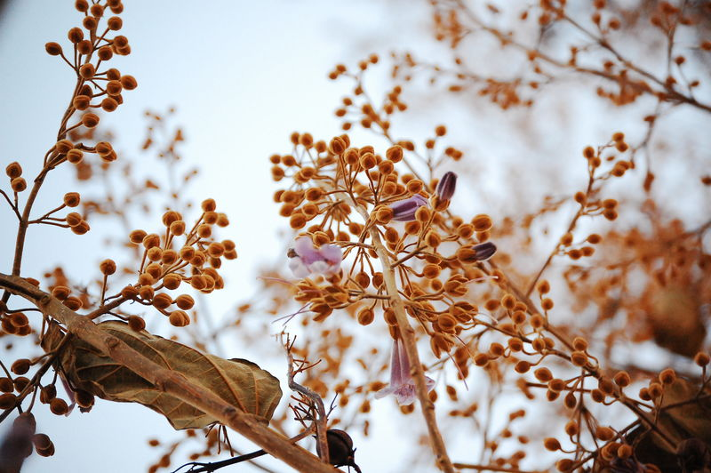 Low angle view of flower buds in autumn