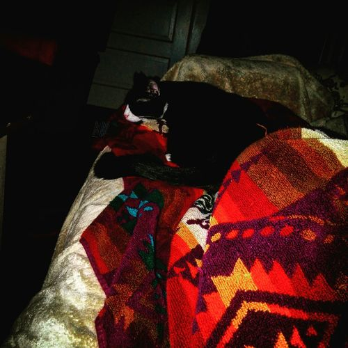 Fallnights Tuxedocat Catlife Catlover dogs have masters cats have servants lol Blankets