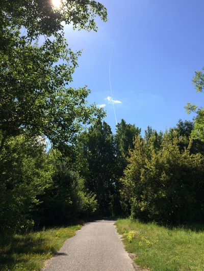 Leading the way No Filter Piešťany Slovakia Plane Spotting Plane Trail Nature Green Grass Blue Sky Sun Behind The Tree Trees Paved Path Shadows