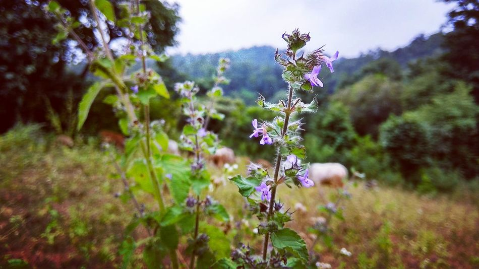 Flower Rural Scene Summer Multi Colored Purple Flower Head Close-up Sky Plant Grass