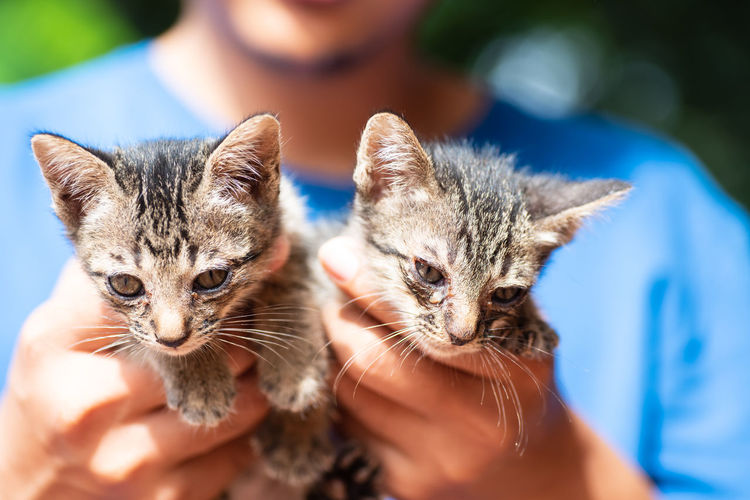 Close-Up Of Hand Holding Kittens
