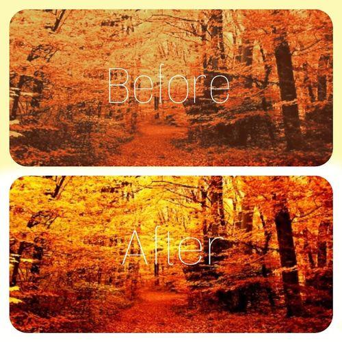 First Eyeem Photo 😍😍😍😍❤️❤️❤️❤️❤️ ◽️♠️◽️ Ağaçlar ♥♡♥ Sonbahar Da Yapraklarını Döker🍃 Doğa Manzara😍😍 Manzara Dediğin  ⬛⬜ ◾◽◾