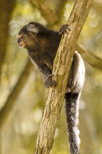 A monkey in the tree. Animal Animal Themes Brazil Close-up Jardim Botânico Rj Mammal Monkey Nature Outdoors Rio De Janeiro Selective Focus Tree Tree Trunk Wildlife First Eyeem Photo