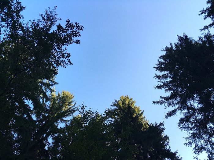 Forest Roof Forest Blue Sky Forest And Sky Trees And Sky Trees Bavaria