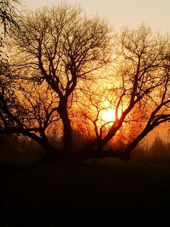 Nature Silhouette Beauty In Nature Sky Tranquility Bare Tree Sunlight Sunrise
