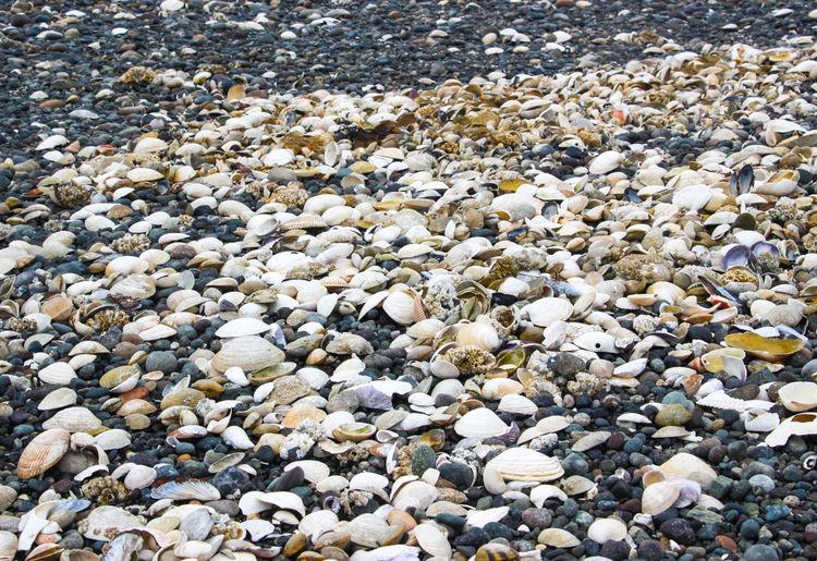 Sea shells on a