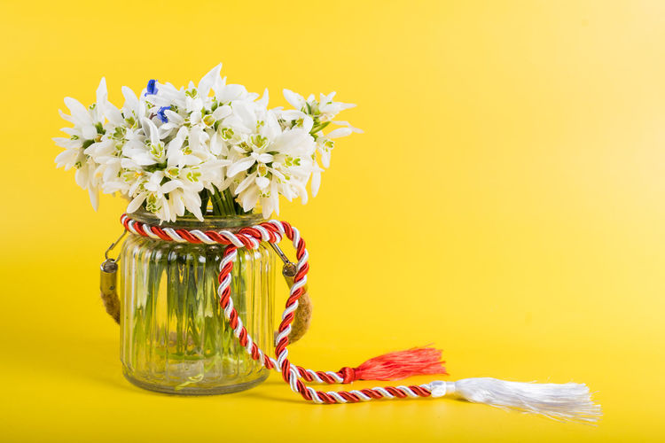 Close-up of yellow flowering plant in vase