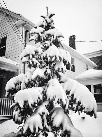 Urban Trees Snow Winter Wonderland