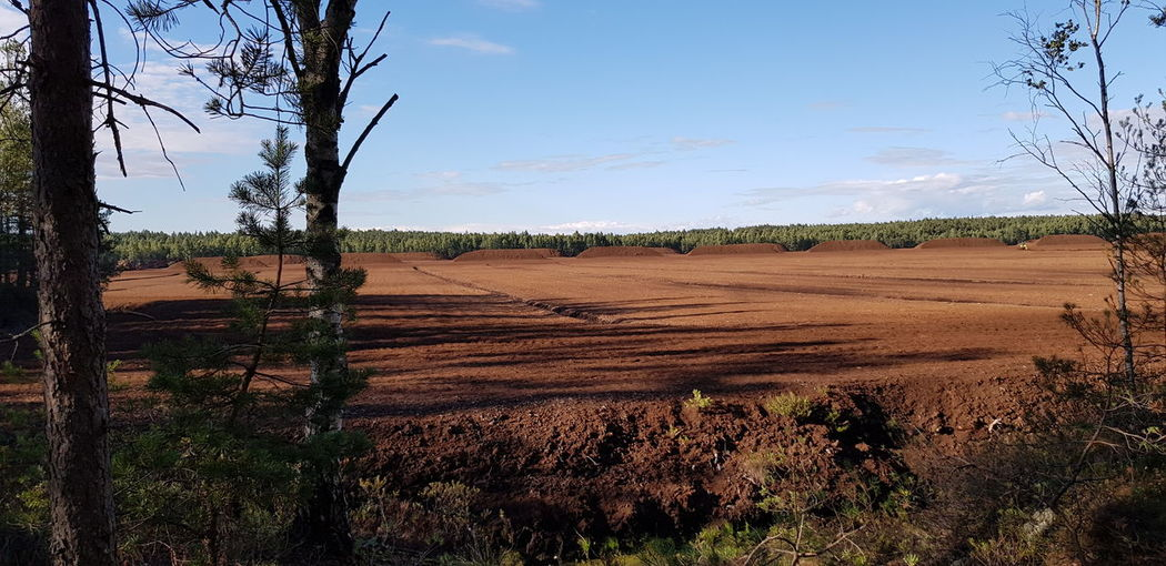 Peat Peat Field Tree Agriculture Rural Scene Sky Agricultural Field