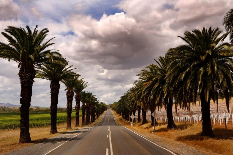 Palm trees by road against sky