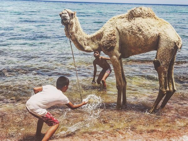 """Live For The Story Real People Childhood Water Outdoors People Sea Egypt Cultures Travel Nature World Summer I took this photo by chance while on Holidays in Dahab, Egypt. These two kids were trying really hard to """"shower"""" their camel during a hot morning"""