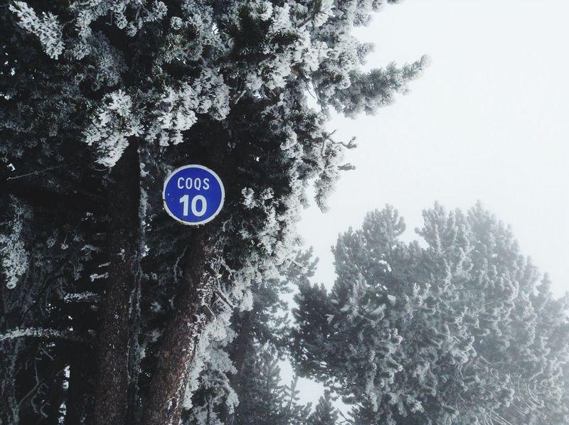 Let it Snow ! Taking Photos Nature Landscape