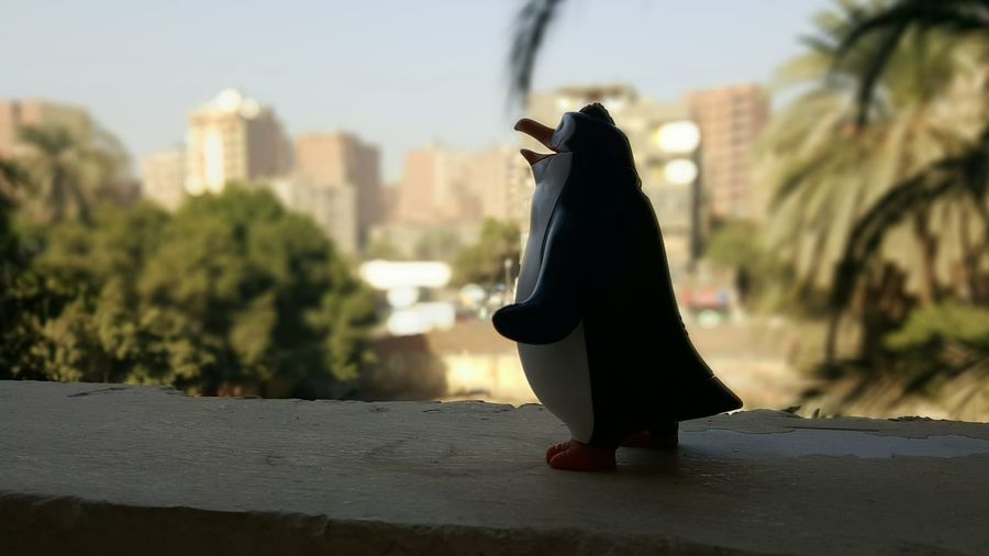 No Filter First Eyeem Photo Sky No Filters Or Effects Balcony Maadi Egypt Love Penguins Penguinsarethebest POTD Pic Of The Day View Outdoors
