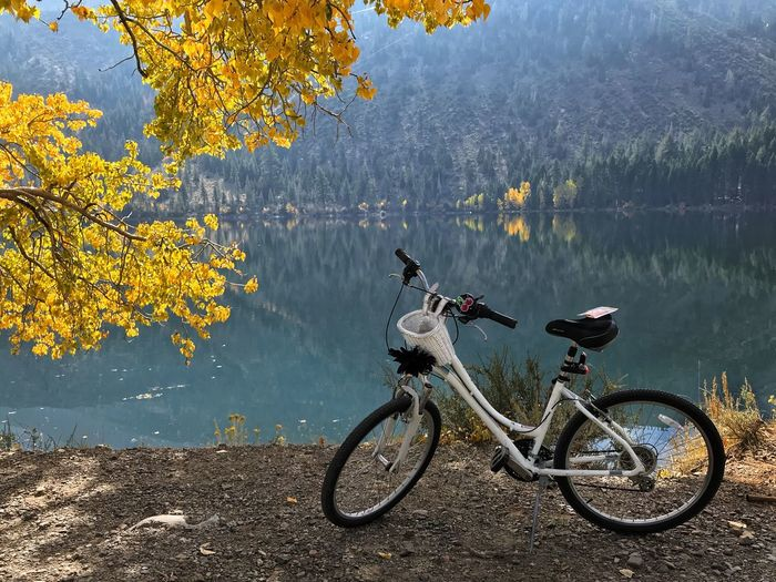 Bicycle by lake during autumn