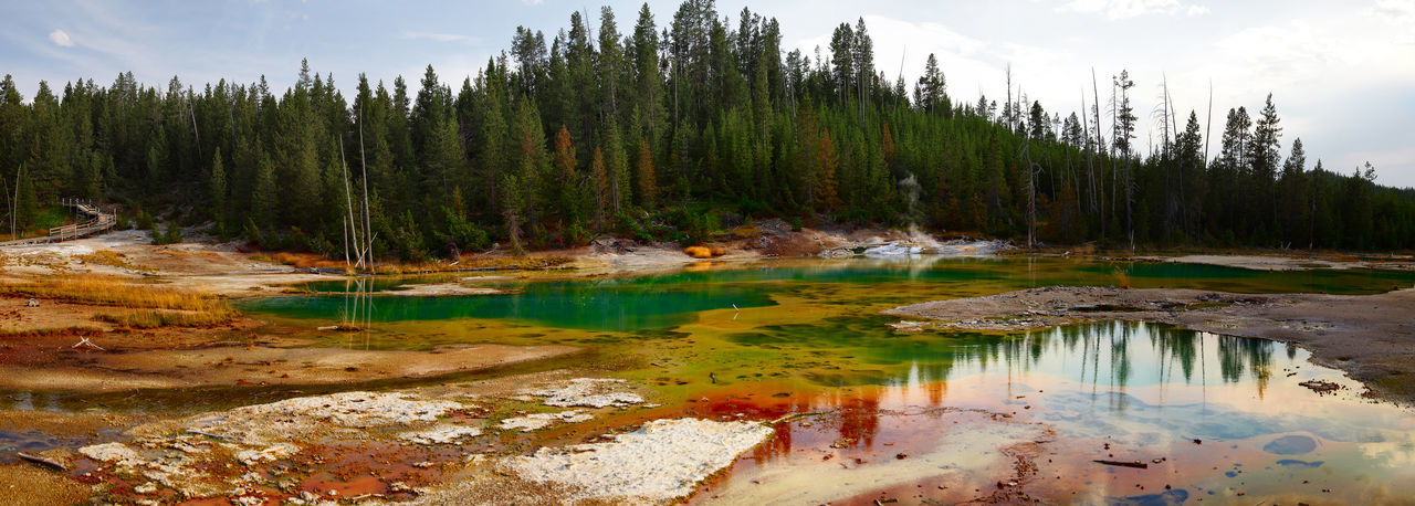 colors of the yellowstone national park (Wyoming, USA) Scenics - Nature Beauty In Nature Tranquil Scene No People Lake Reflection Nature Forest Outdoors Yellowstone National Park Colors Panorama Panoramic Photography Panoramic View Panoramic Landscape USA Wilderness Area Wyoming Landscape Wyoming Geothermal Activity Geothermal Fields Volcanic Landscape Volcanic Activity Tourist Attraction  Hot Lake