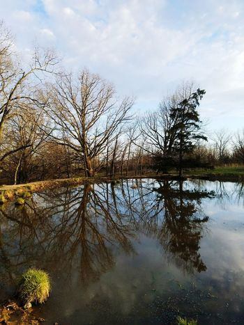 Woods Landscape Sunshine ☀ Missouri Ozarks United States Missouri Sky And Clouds Hayfield Family Farm Pond Life Pond Refection Trees Water Water Reflections Beauty In Nature Tree Water Lake Reflection Sky Cloud - Sky Reflection Lake Scenics Calm Idyllic Reflecting Pool Farmland Countryside Tranquility