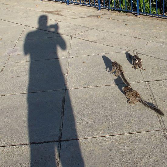 The Street Photographer - 2017 EyeEm Awards Sunlight Shadow Nature