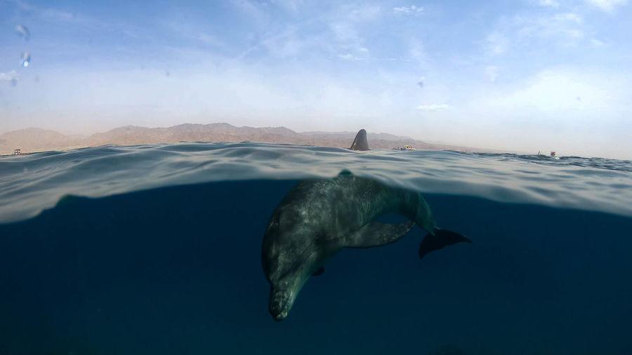 Animals In The Wild Dolphin Israel Wildlife Wild Wildlife & Nature Amazing Wonderful