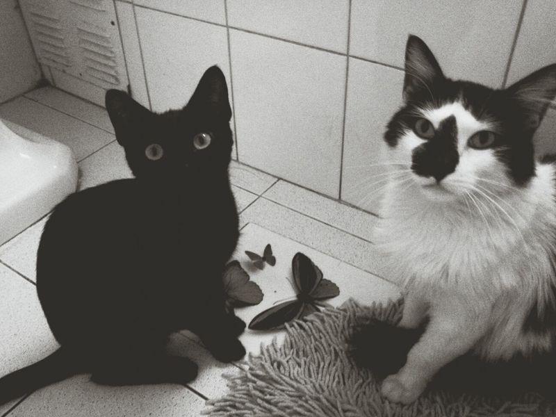 Cats Cute Meow Bestfriends <3