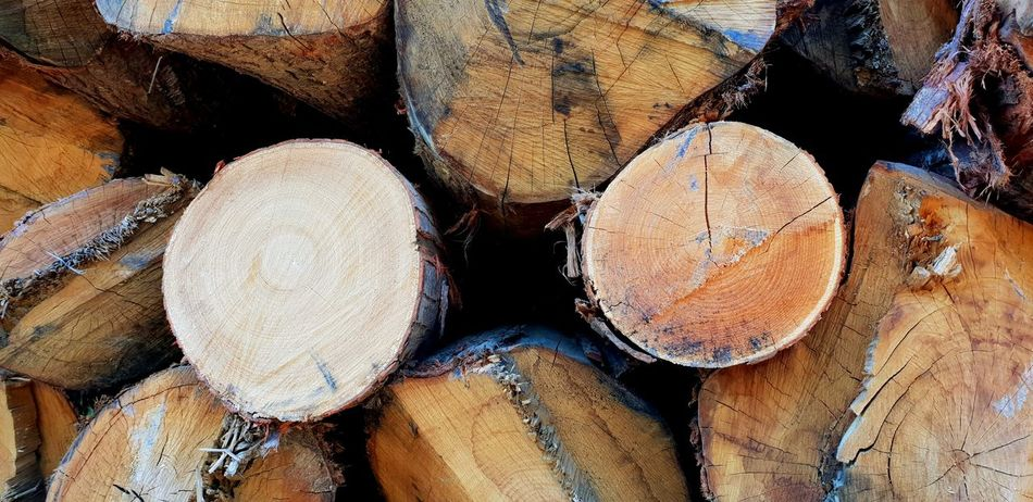 Lumber mills Selected For Premium EyeEm Selects Lumberyard Lumber Mill Lumber Wood - Material Tree EyeEm Best Shots Eye4photography  EyeEm Gallery EyeEm EyeEmBestPics Trees Treescollection Forestry Industry Woodpile Backgrounds Full Frame Stack Timber Heap Log Deforestation Pile Wooden Firewood Tree Trunk Woods