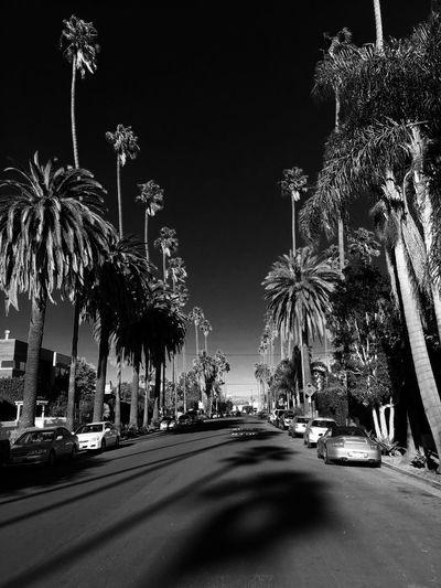 Venice Abbot Kinney Blackandwhite Streetview California Palm Trees Darksky No People Cloud - Sky Tranquility Outdoors